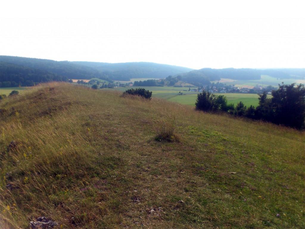 Steinheim1